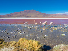 Red Lagoon - Bolivien
