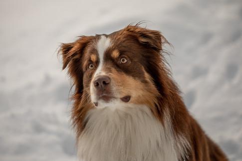 Haustierfotograf Vorarlberg