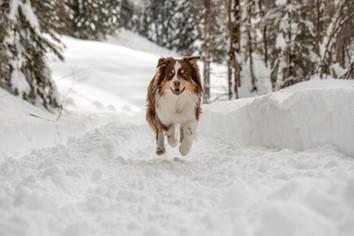 natürliche hunde fotos vorarlberg
