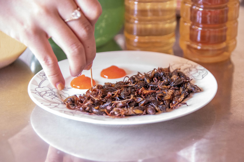 Eating grilled Crickets in Dalat in Vietnam