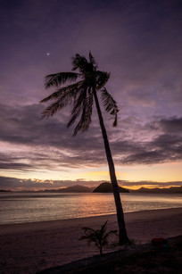 a palm in front of a beautiful sunset in the philippines