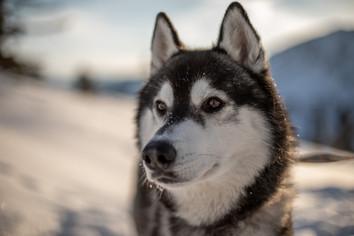 hunde fotos tipps