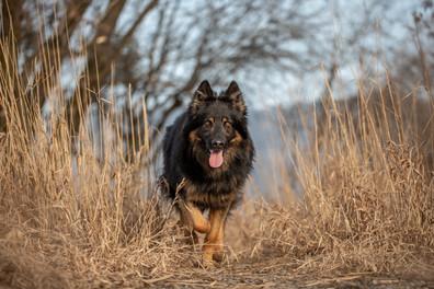 Hundefotos am Bodensee