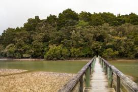 Ohio Bush Walk - Bay of Islands - Neuseeland