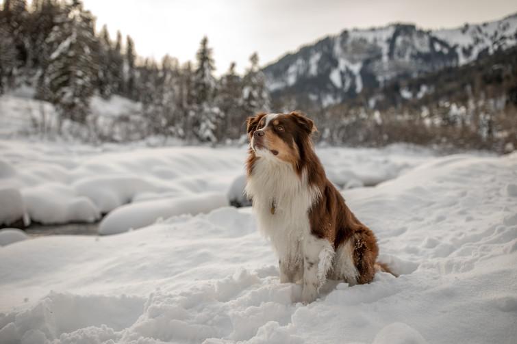 Hundefotos im Schnee