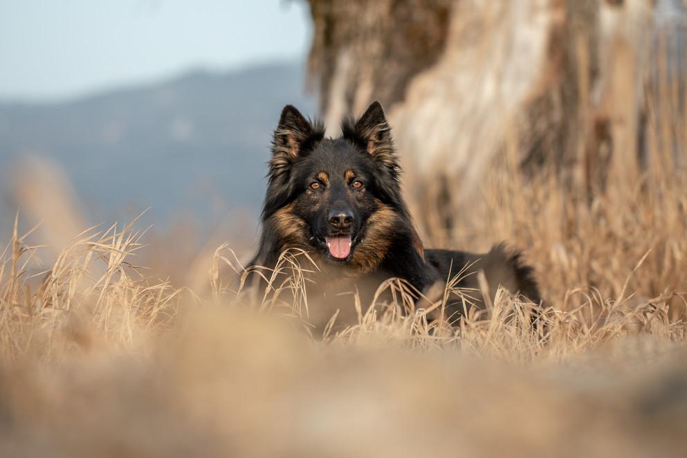 Fotograf für Hunde
