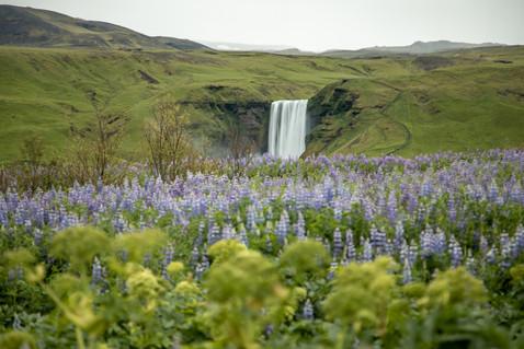 Skogafoss Wasserfall in Island || Bohoray - Abenteuer Hochzeits und Elopement Fotografin Island - Victoria Rüf  || www.bohoray.com