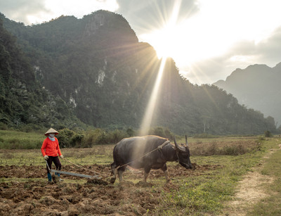 Traditional agriculture in Phong Na in Vietnam