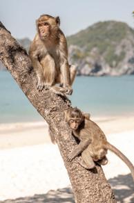 cute Monkeys in Halong Bay in Vietnam