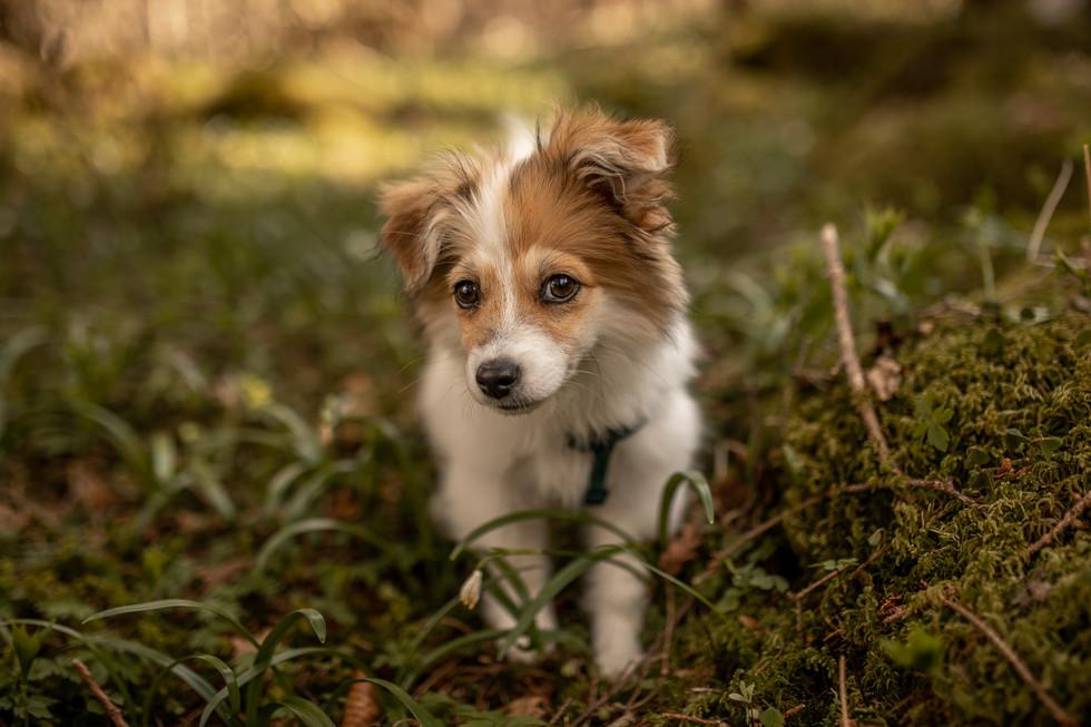 fotograf hunde vorarlberg