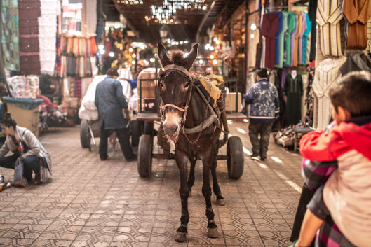 Donkes on the streets of the Medina of Marrakech | Travel and Landscape Photography in Morocco Africa || Bohoray - Adventure Elopement and Wedding Photographer - Victoria Ruef || www.bohoray.com