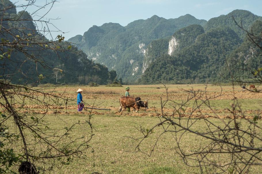 Traditional farming in Phong Na Ke Bang Nationalpark in Vietnam