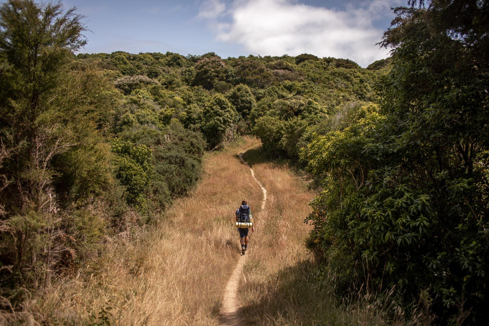 Fabian Willi auf dem Abel Tasman Coastal Track. Diese Wanderung ist mehrtägig und wir auch als Great Walk bezeichnet in Neuseeland. Wild Embrace Fotografie Abenteuer Elopement und Auslandshochzeit Fotografen in  Österreich, Europa und weltweit. www.wildembrace.photo
