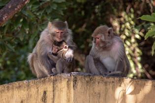cute Monkeyfamily at Halong Bay in Vietnam