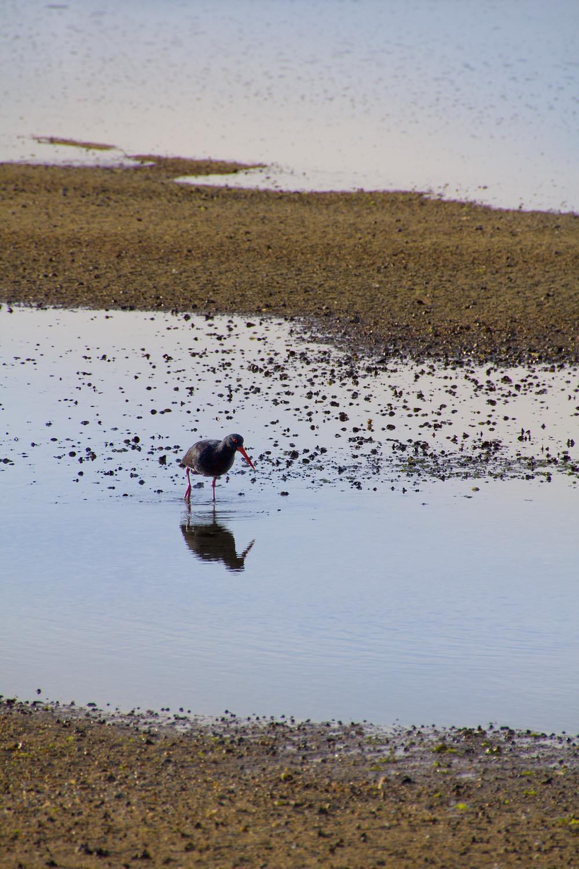 Vogel im Abel Tasman Nationalpark in Neuseeland