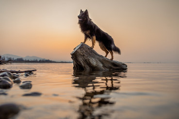 Beeindruckende Hundefotos