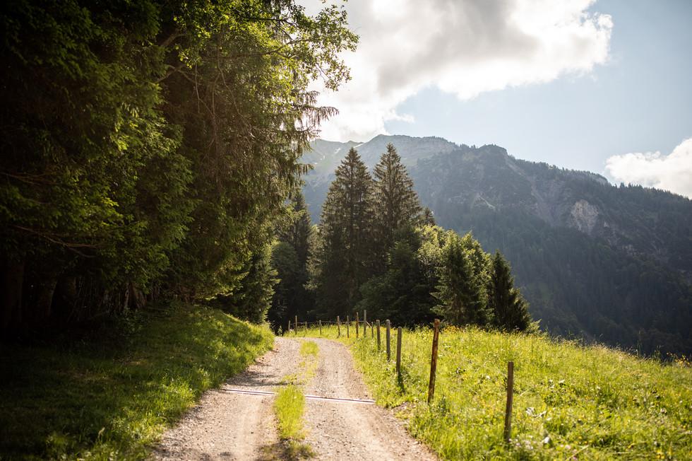 Alpsommer in den Bregenzerwälder Bergen