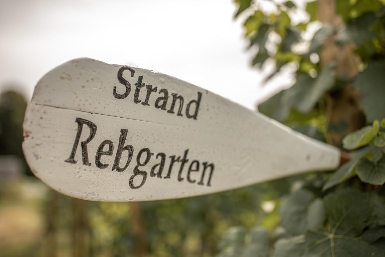 Hochzeit im Weingut Rebgarten