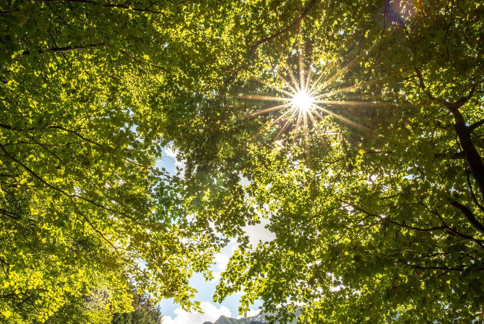 Sommerhochzeit im Bregenzerwald