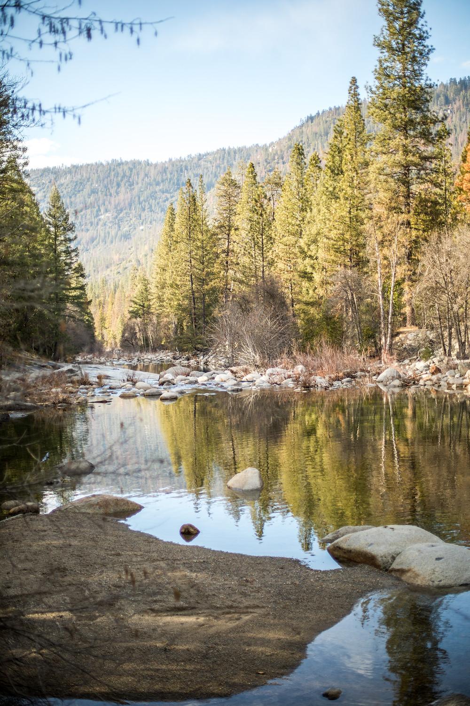 Tannenwald im Yosemite Nationalpark