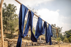 the indigenous people color their clothes with indigo blue