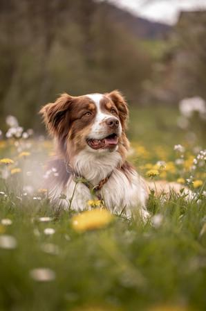 hunde fotograf vorarlberg
