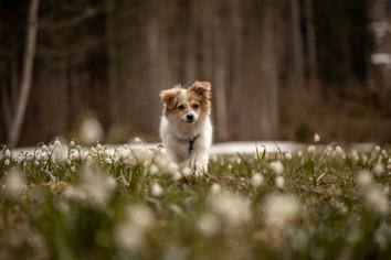 fotoshooting für hunde