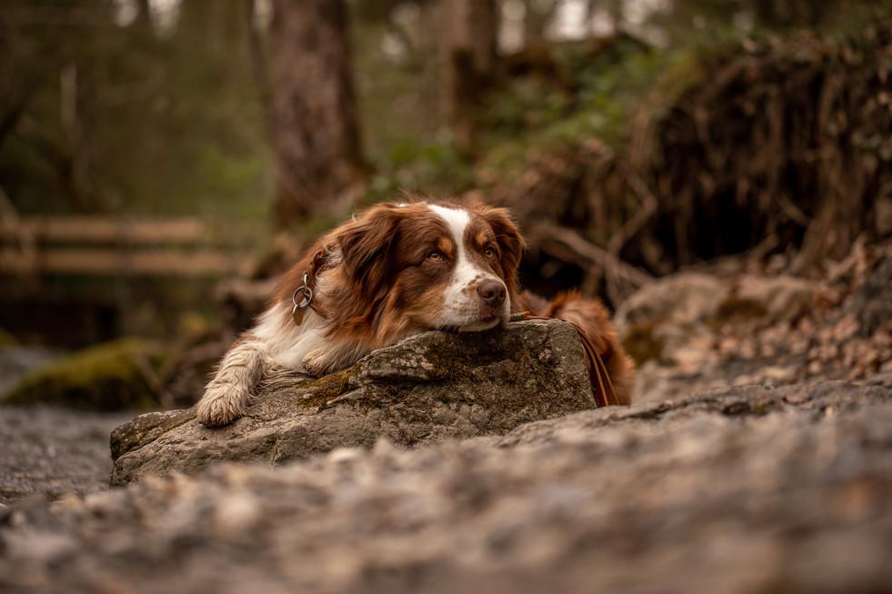 hunde fotos in der natur vorarlberg