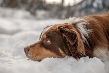 besondere hundefotos vorarlberg
