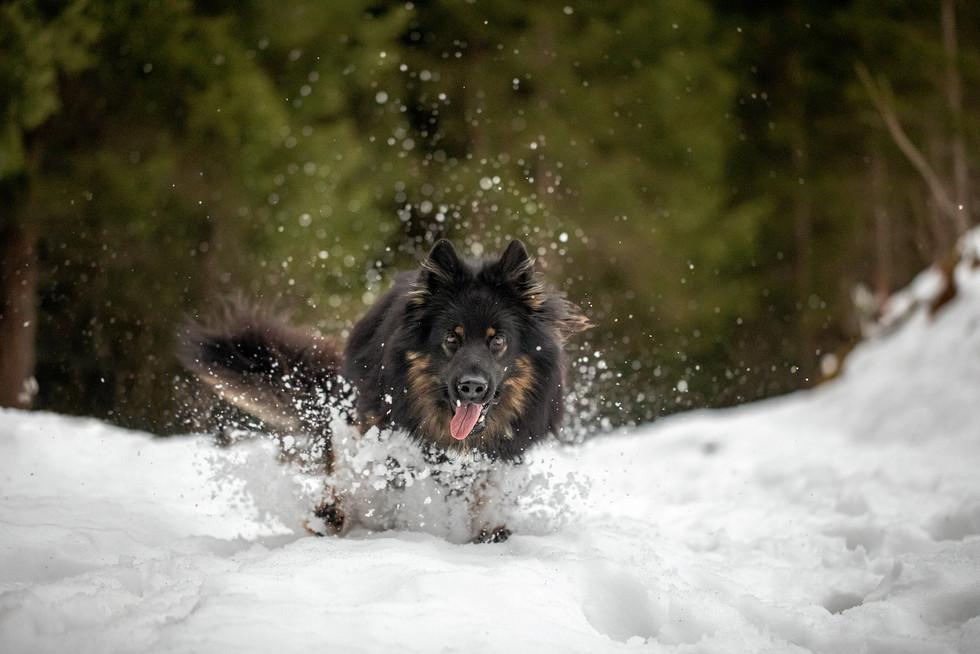 Fotograf für Hunde Vorarlberg