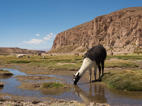 Atacama Wüste - Bolivien