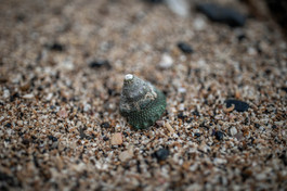 green snail house at the sand beach in Vietnam