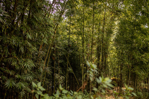 Our hike in Sapa led us into a bamboo forrest in Vietnam