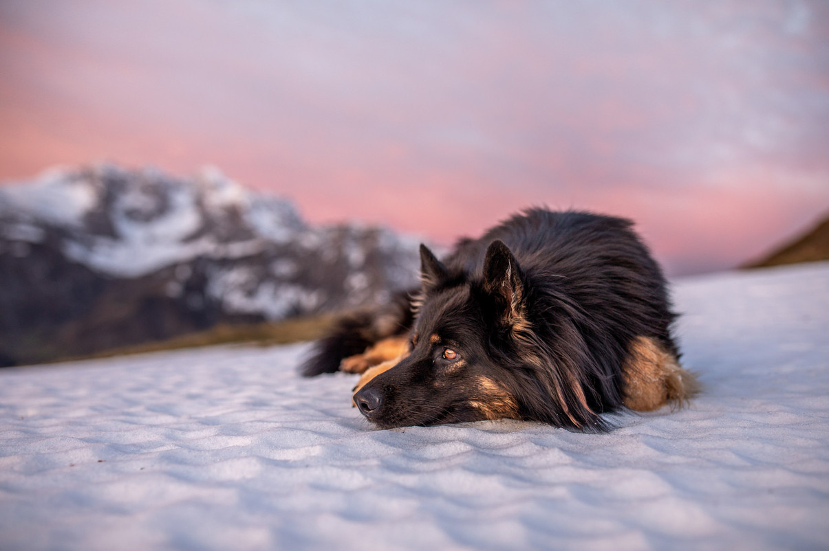 Hundefotos in Österreich