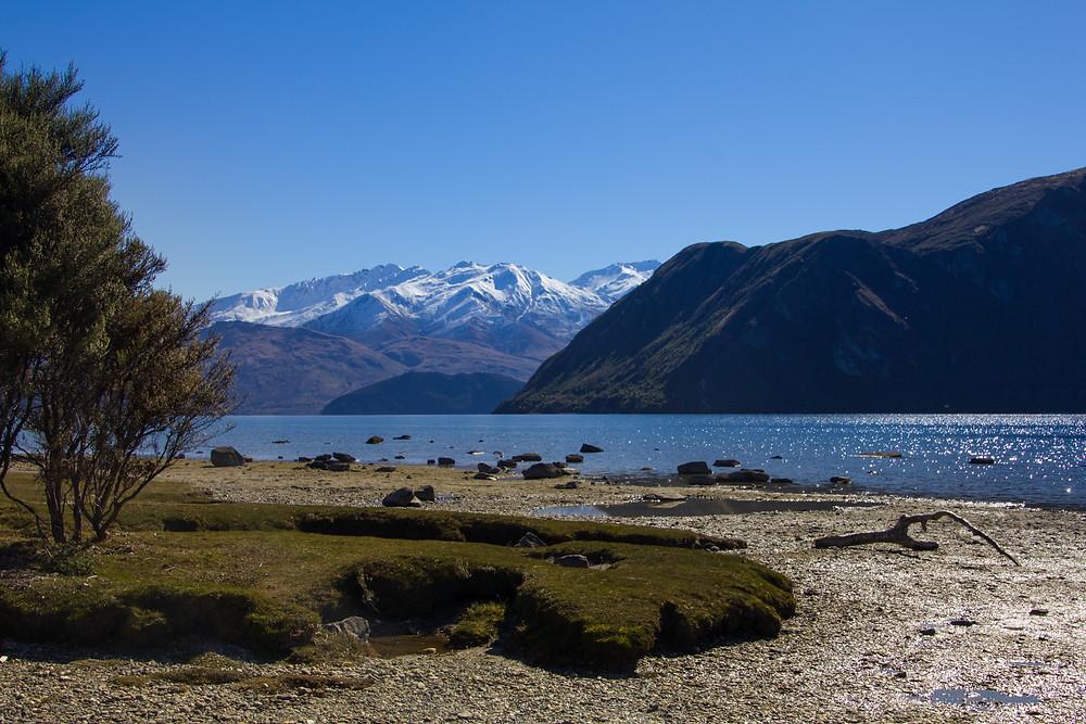 besondere Landschaft beim Lake Wanaka in Neuseeland