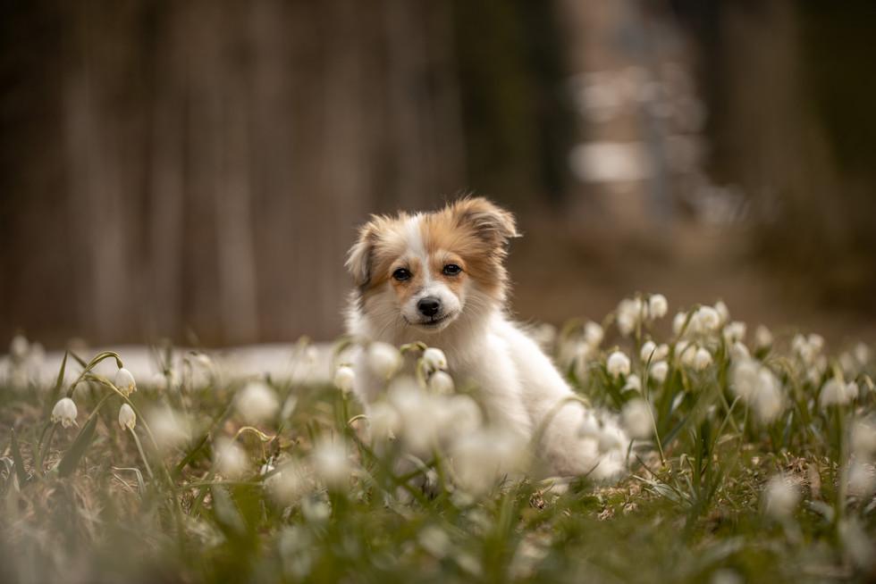 hunde bilder Vorarlberg