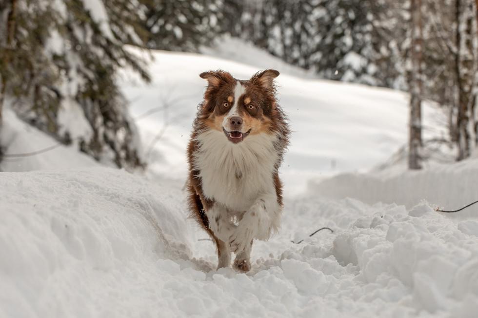 Tierfotograf Vorarlberg