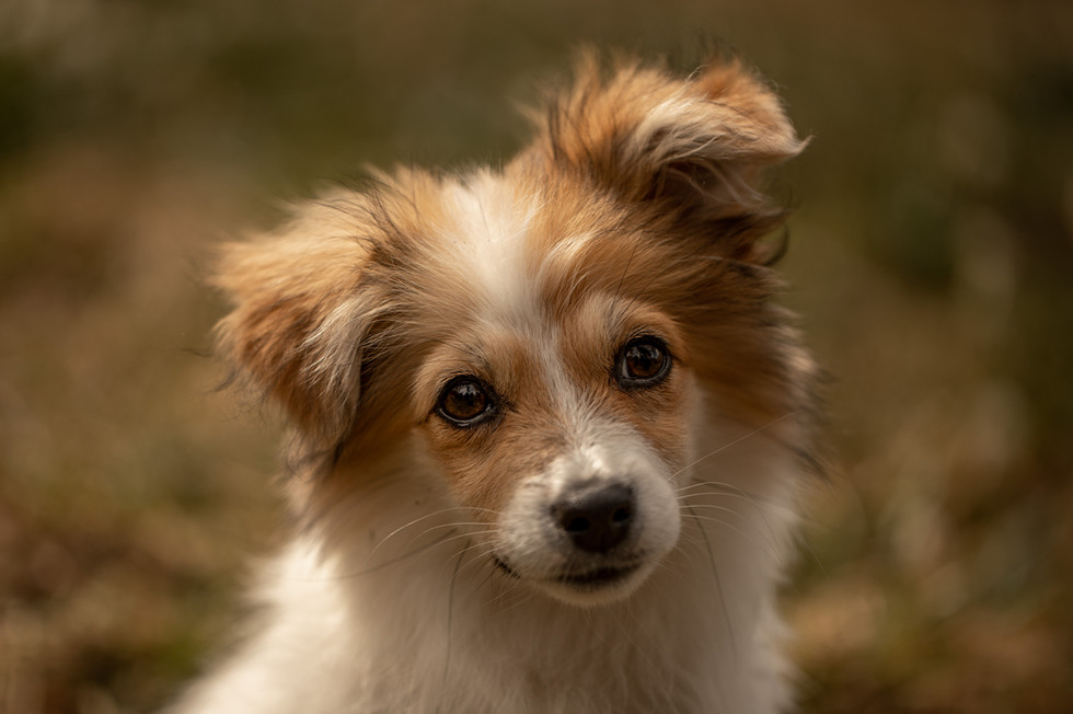 hundefotograf in der nähe