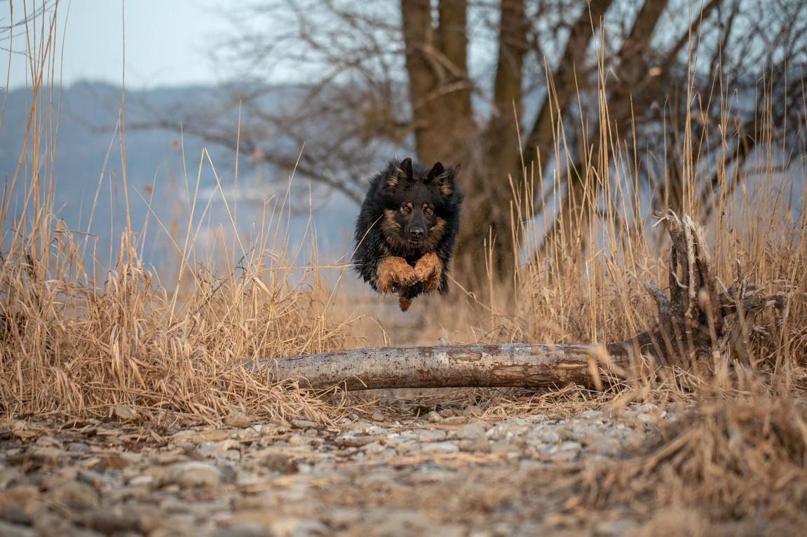 Hunde Action Fotos