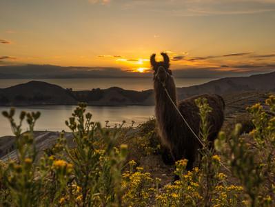 Isla del Sol - Bolivien