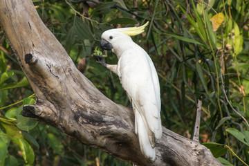 Kakadu - Kakadu National Park - Australien