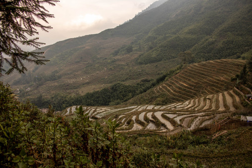 the rice fields in Sapa in Vietnam have been amazing even in Winter