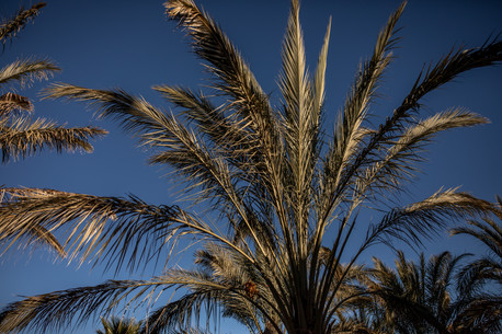 Palm Trees in Ourzazate | Travel and Landscape Photography in Morocco Africa || Bohoray - Adventure Elopement and Wedding Photographer - Victoria Ruef || www.bohoray.com