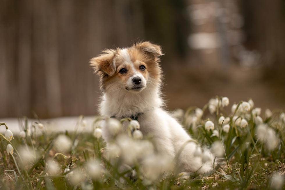 hunde fotos im bregenzerwald