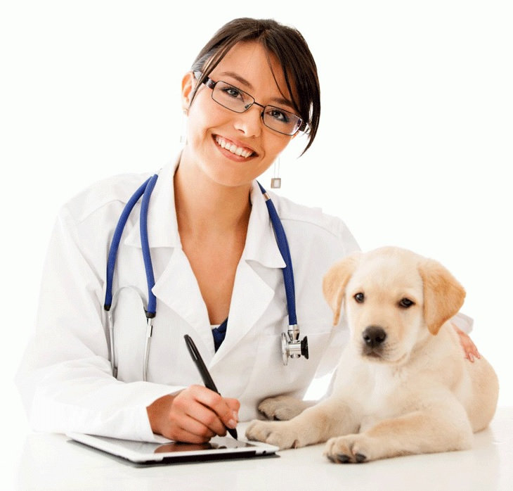 Consulta Veterinaria Medico de Turno II