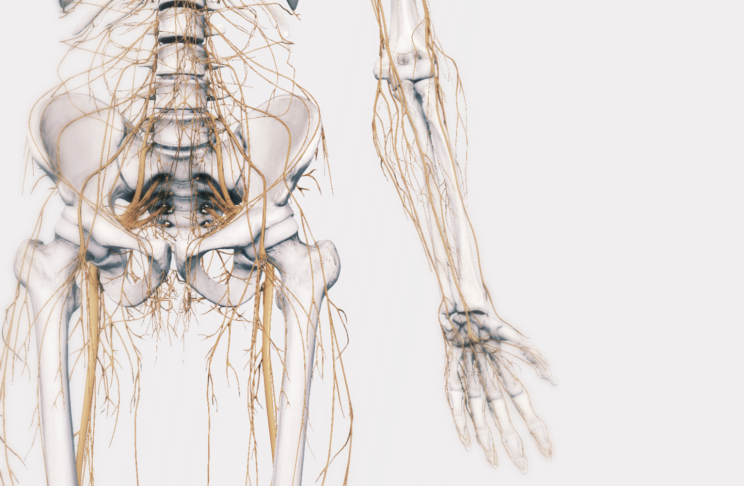 NOT all leg pains are SCIATICA