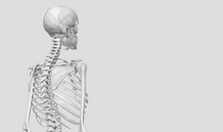 Its your own spine, know it well !!!