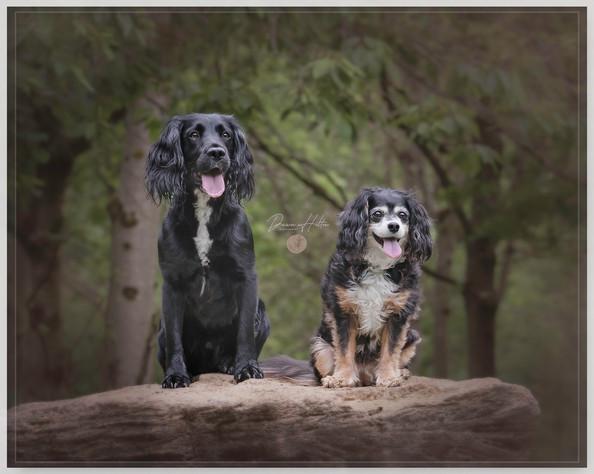 Max & Chloe 01.jpg