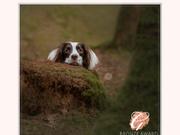 Prep Info: Dog Sessions