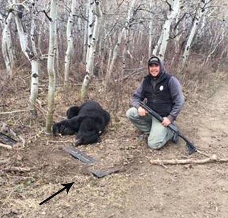Blackfeet Bear#1 500x600.jpg